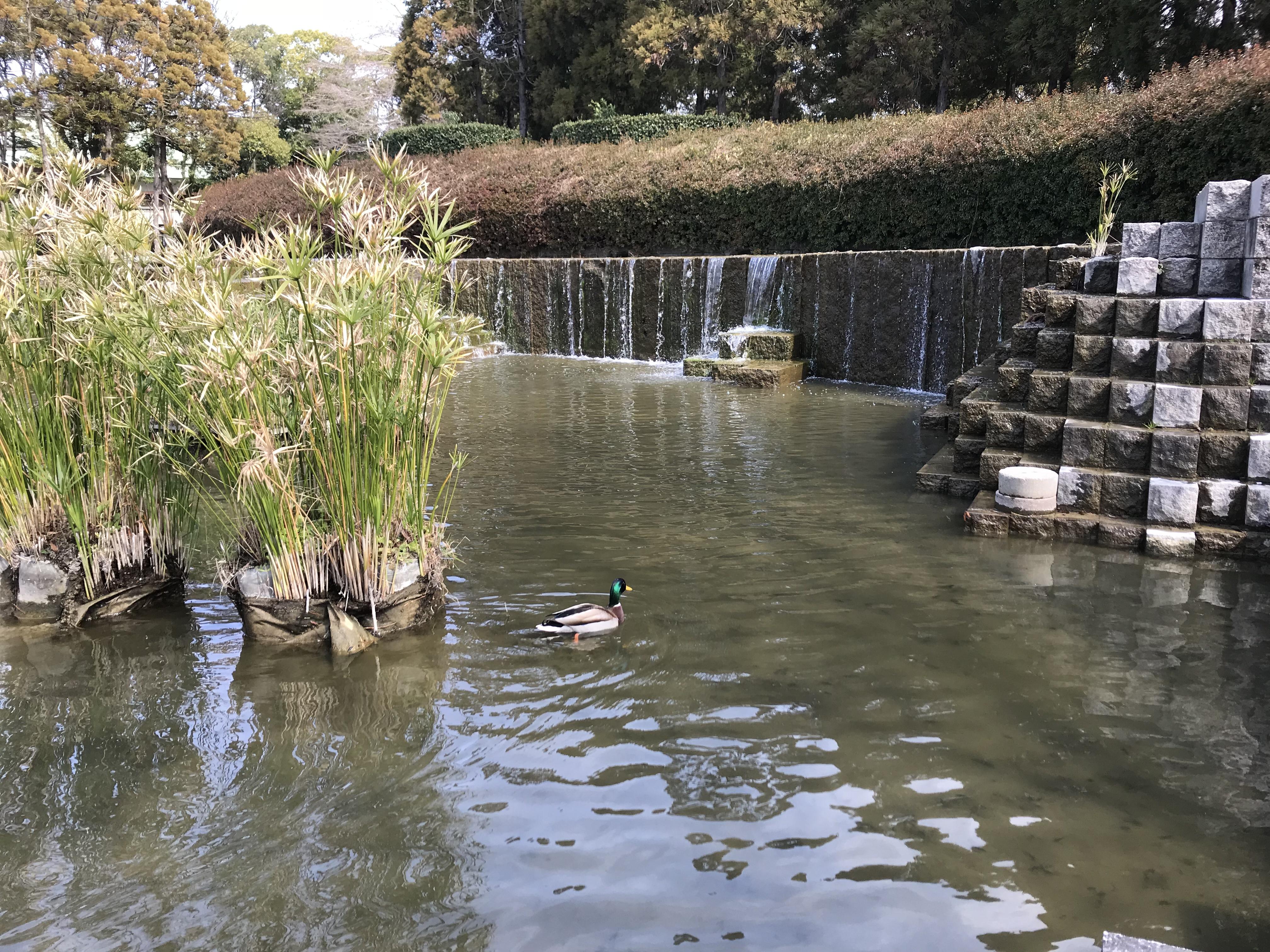 福岡市東公園