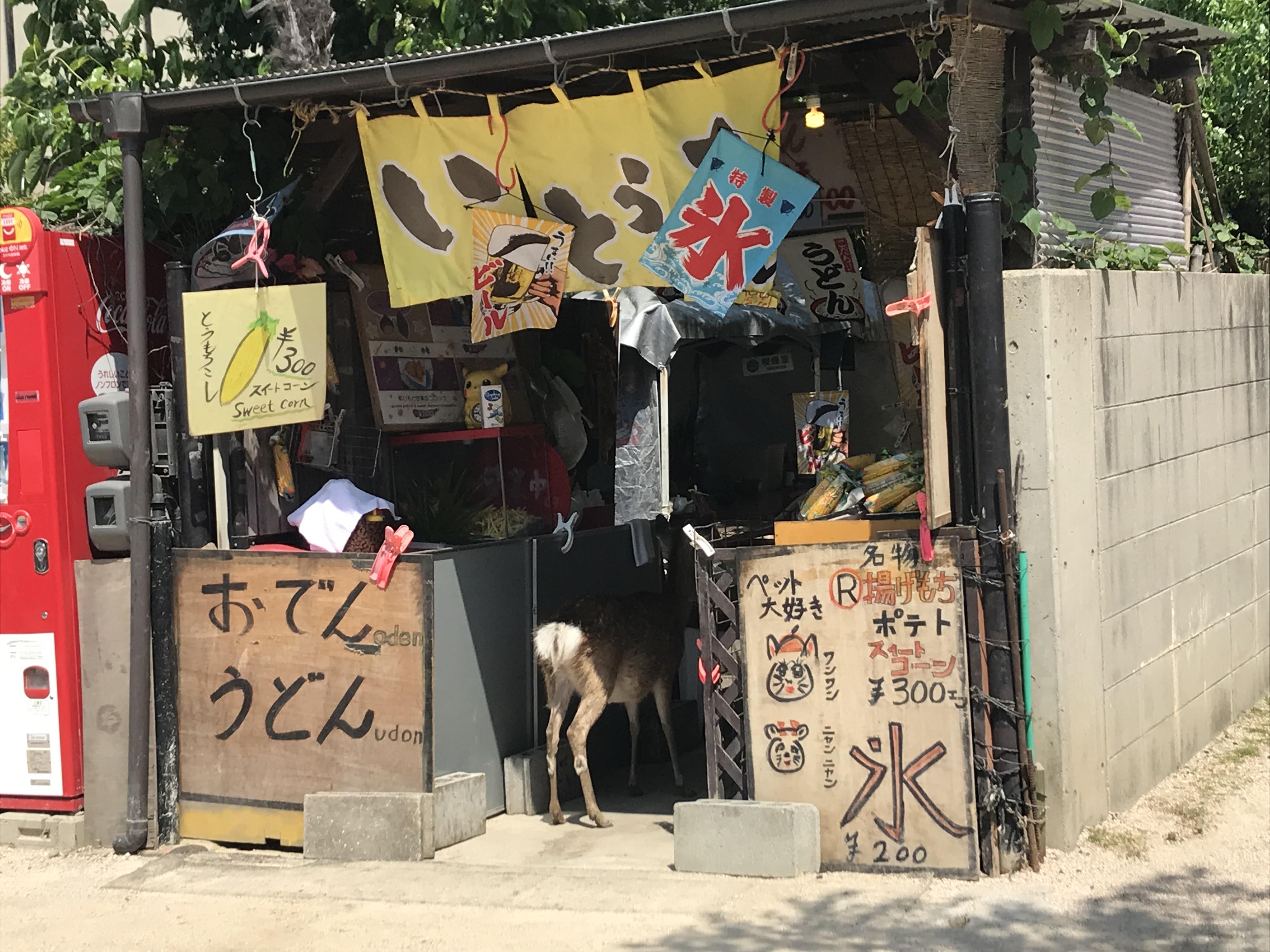 宮島で発見!お店に入店する鹿