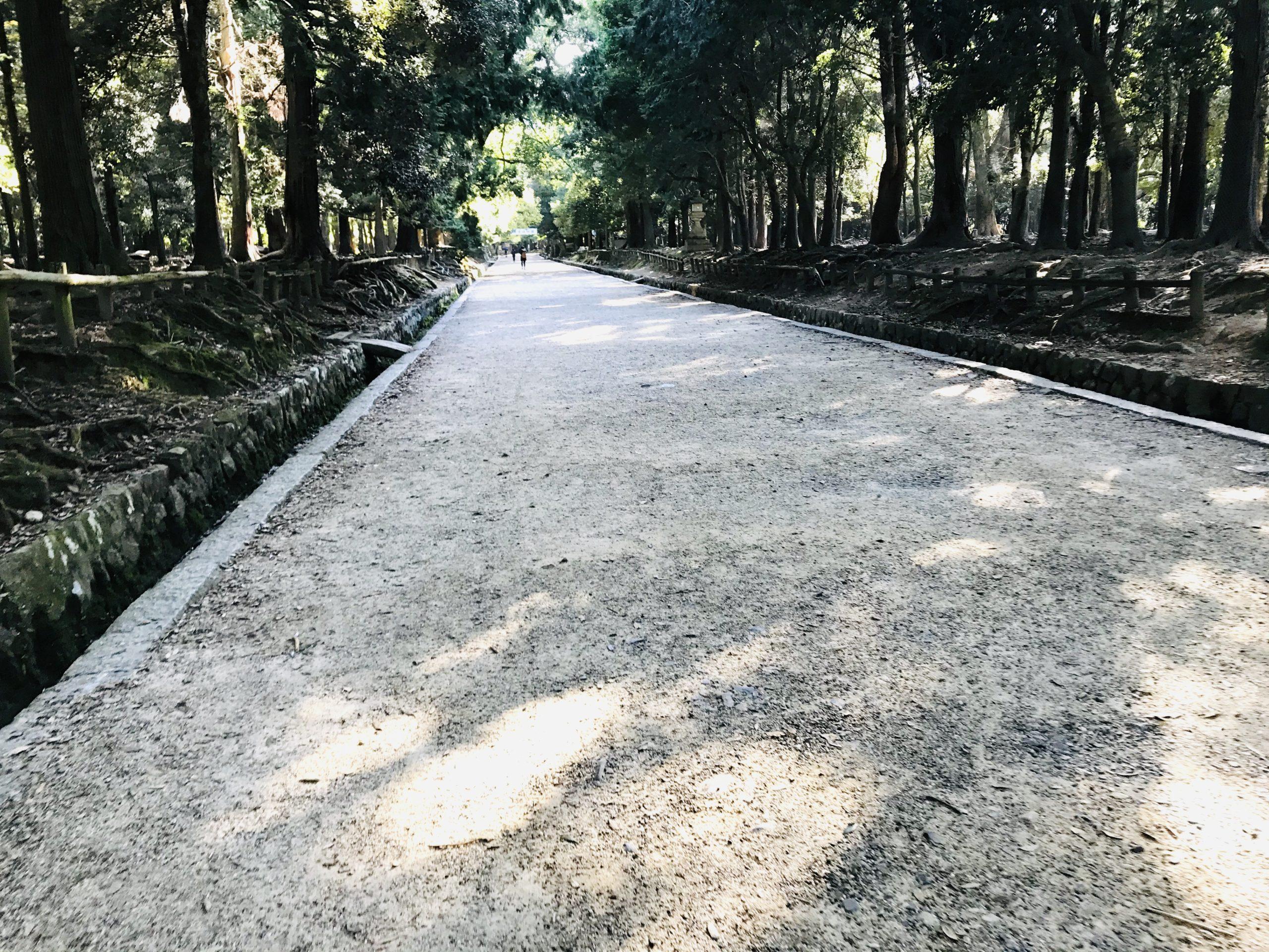 春日大社の参道を散策♬鹿は神の使い