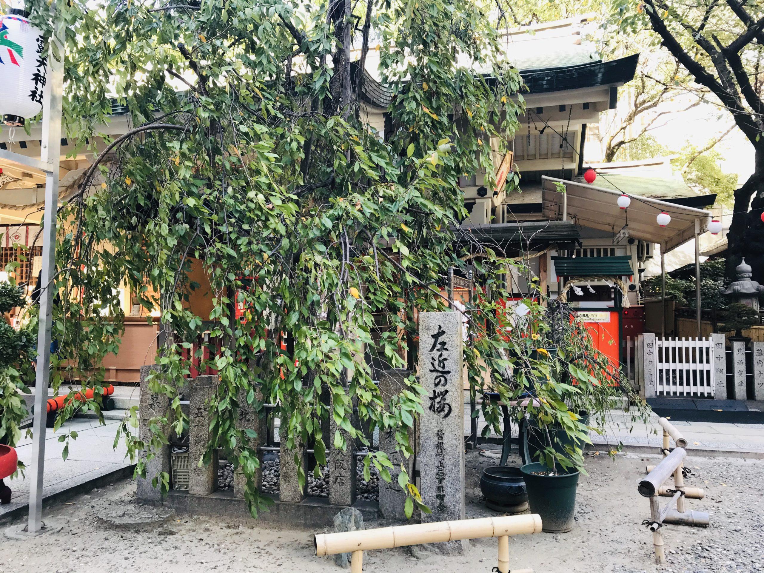 大阪桜が綺麗な露天神社