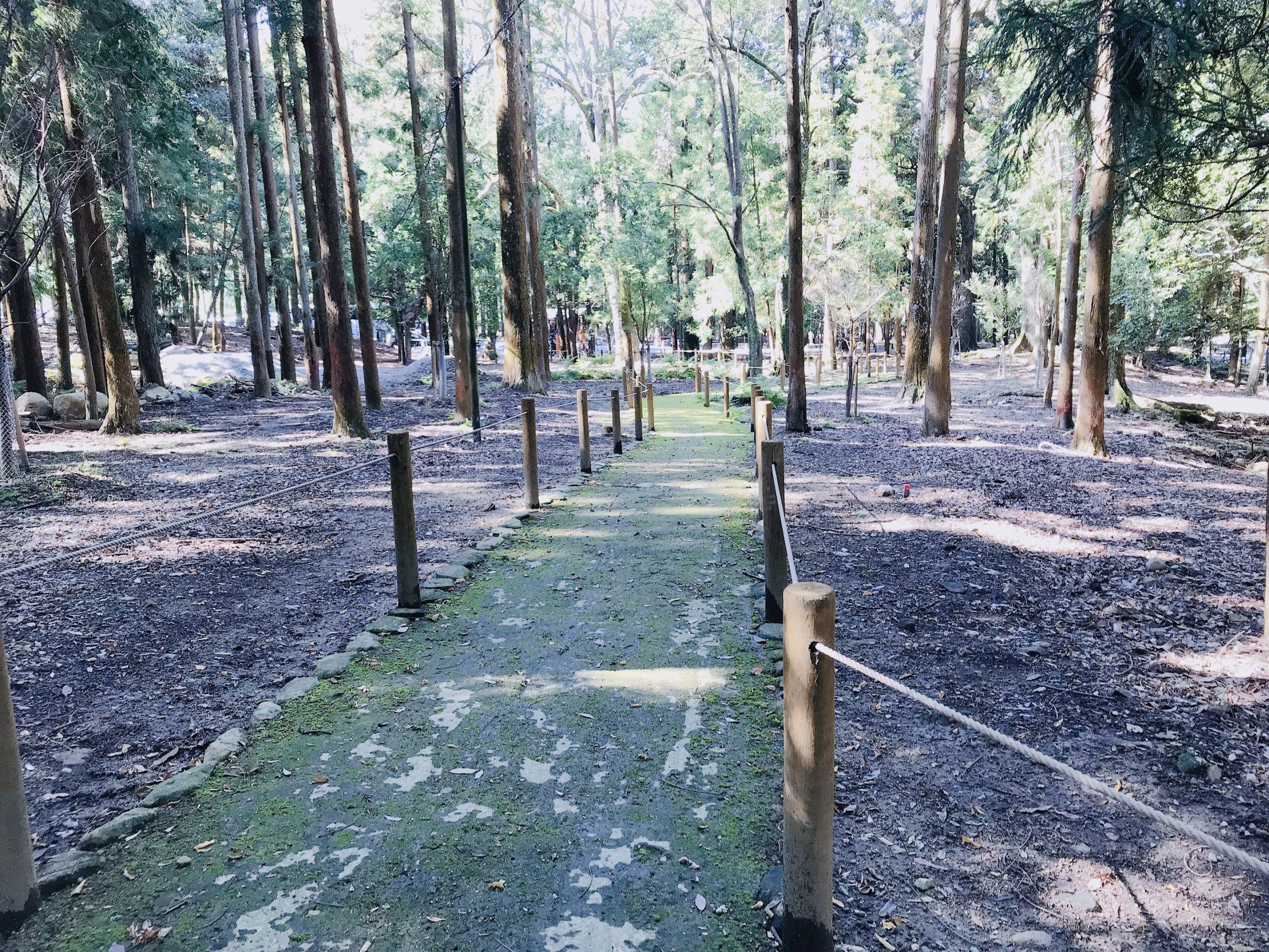 奈良公園・春日大社で自然と鹿を満喫