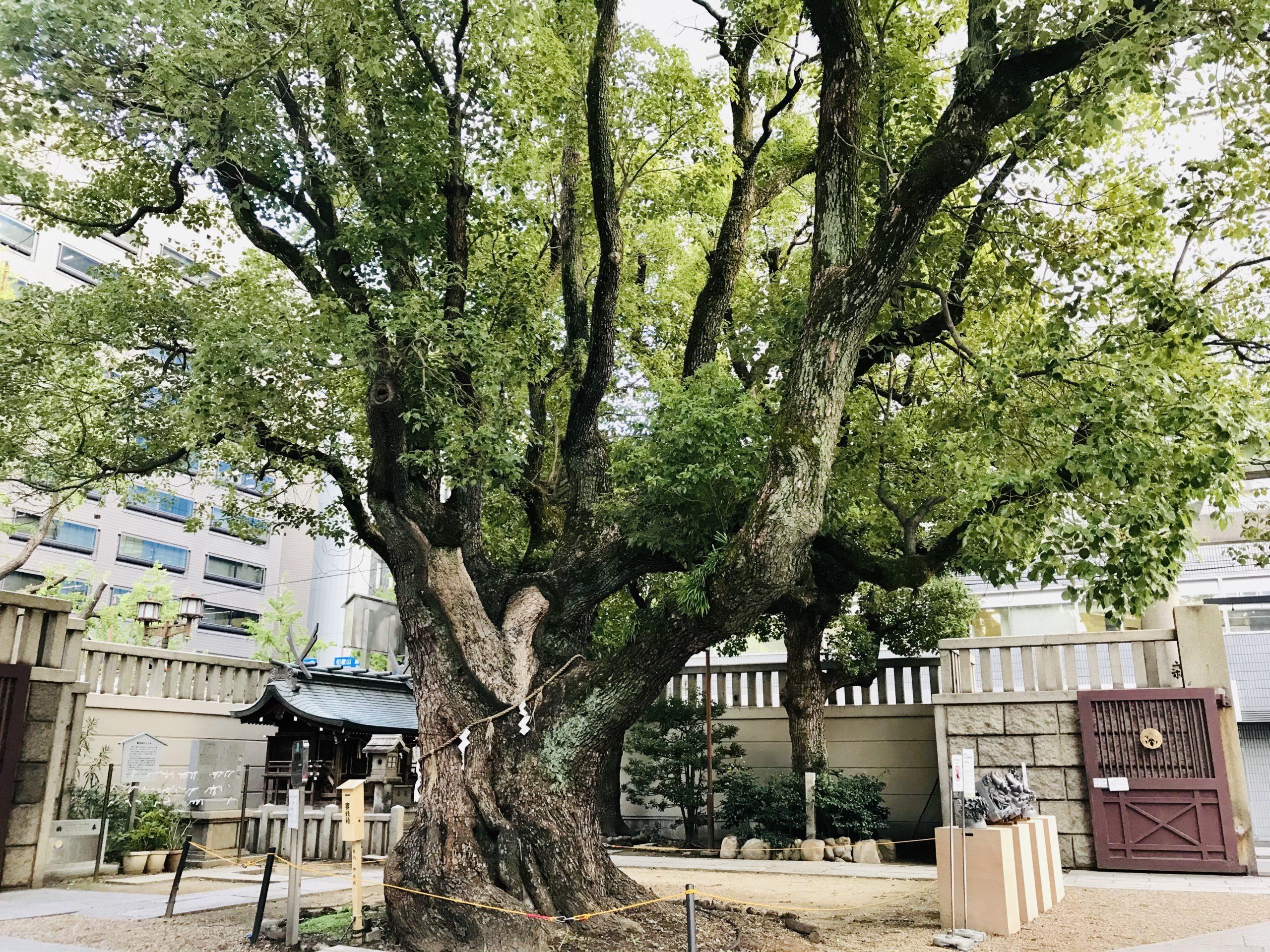 難波神社の御神木はパワースポット!