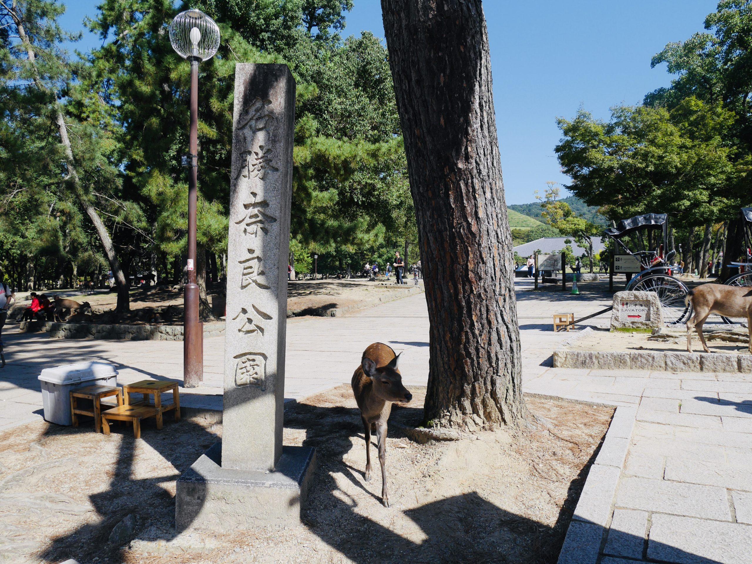 奈良公園で鹿に癒され東大寺で歴史散策