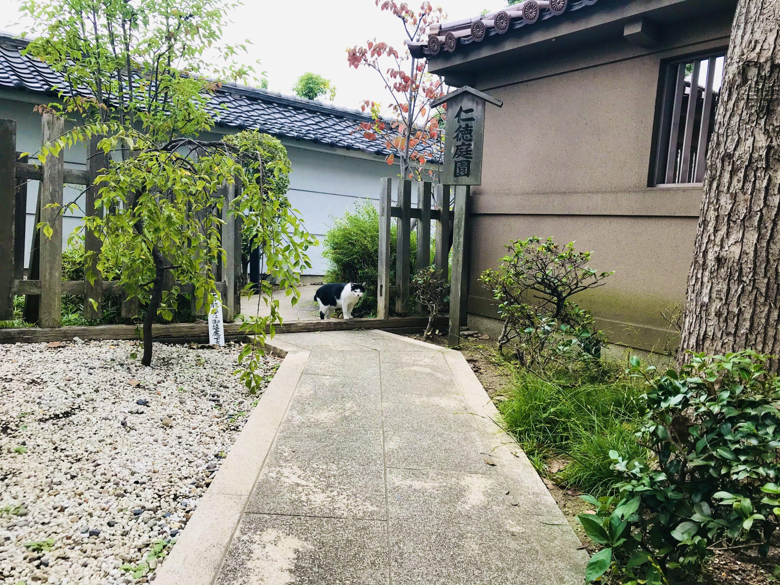 高津宮の仁徳庭園と猫