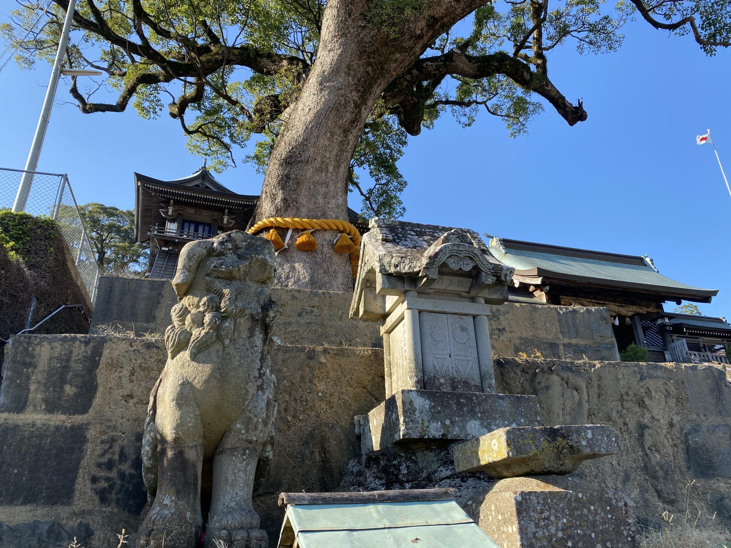 諏訪神社のご神木と狛犬