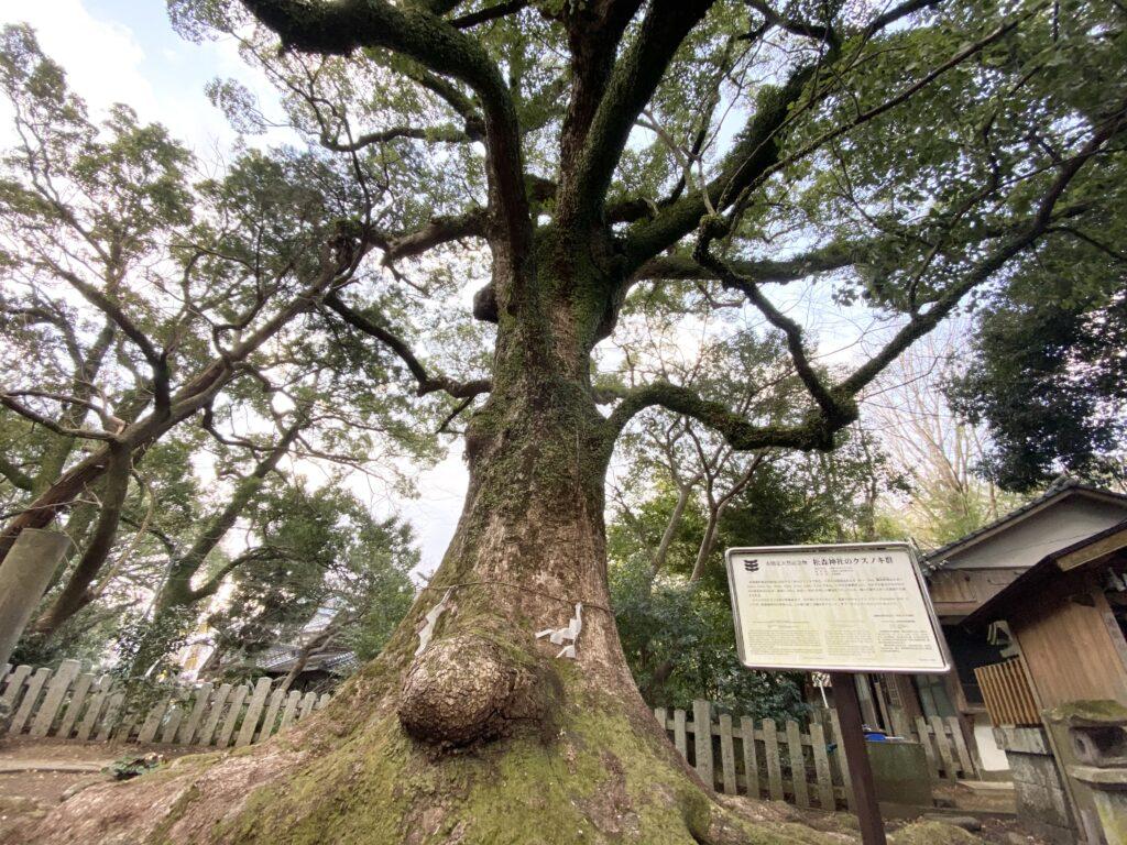 松森天満宮の大楠の木はパワースポット!長崎