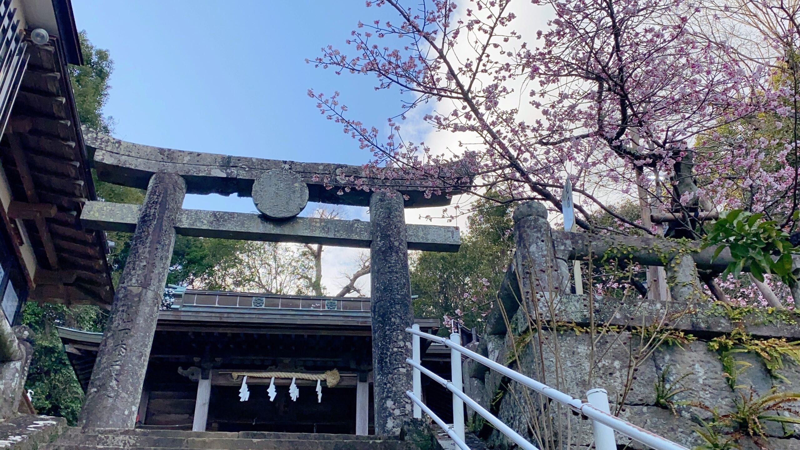 西山神社の寒桜
